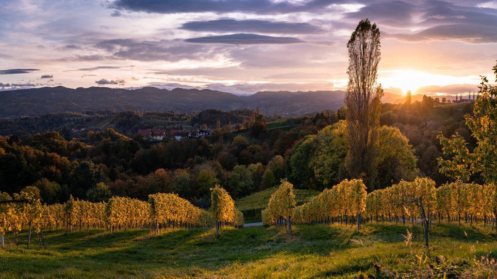 Sonnenuntergang in der Herbsturlaubsregion Südsteiermark. Weinberge